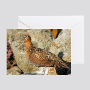 Male red grouse Greeting Card