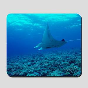 Manta ray Mousepad