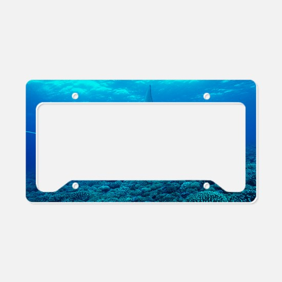 Manta ray License Plate Holder