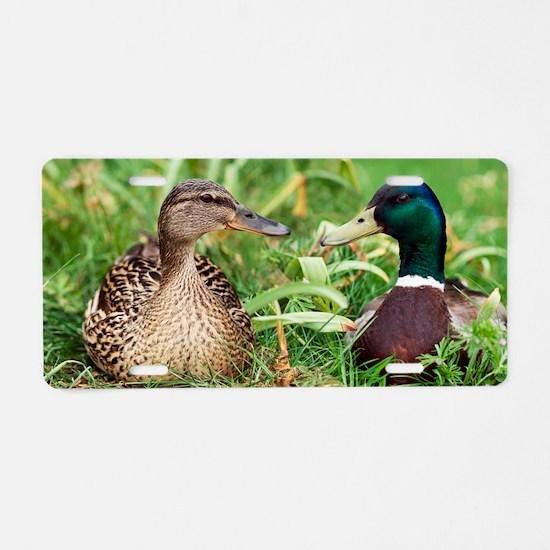 Mallard ducks, composite im Aluminum License Plate