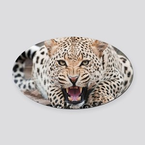 angry cheetah Oval Car Magnet