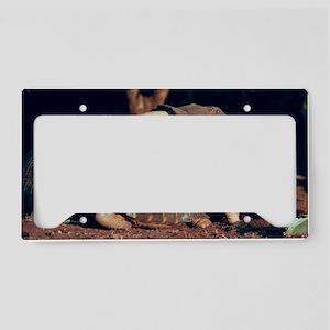 Mating tortoises License Plate Holder