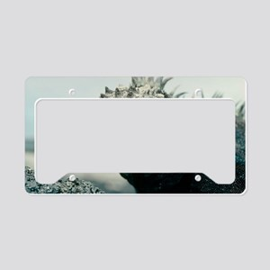 Marine iguana License Plate Holder