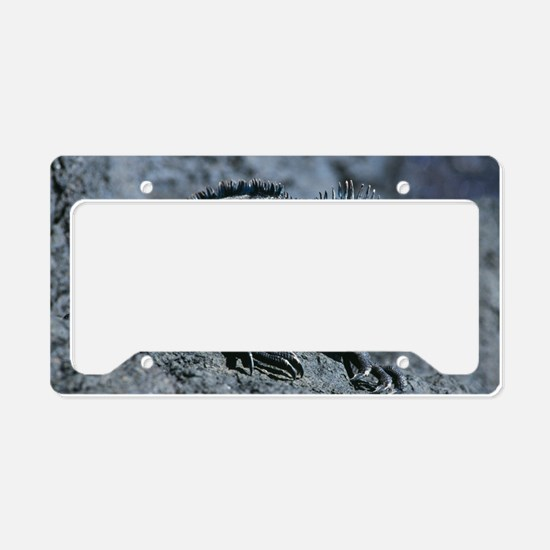 Marine iguana License Plate Holder