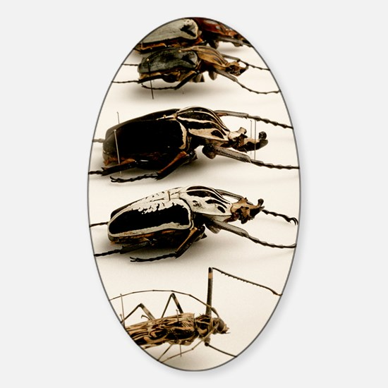 Beetle collection Sticker (Oval)