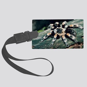 Mexican redknee tarantula Large Luggage Tag