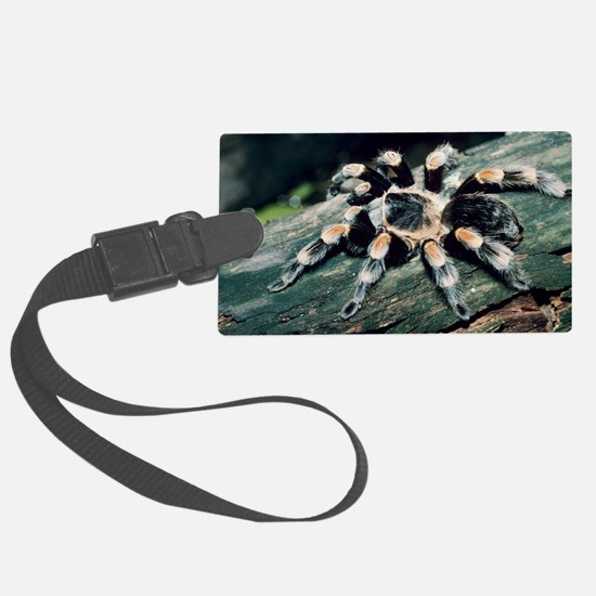 Mexican redknee tarantula Luggage Tag