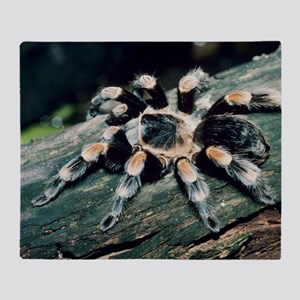 Mexican redknee tarantula Throw Blanket