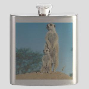 Meerkats Flask