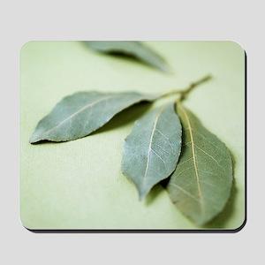 Bay leaves (Laurus nobilis) Mousepad
