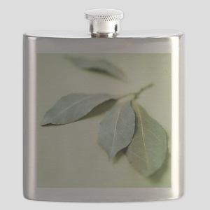 Bay leaves (Laurus nobilis) Flask