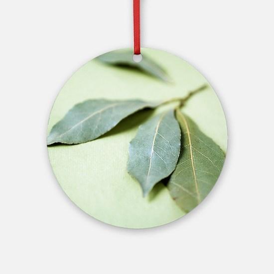 Bay leaves (Laurus nobilis) Round Ornament
