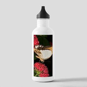 Mocker swallowtail but Stainless Water Bottle 1.0L