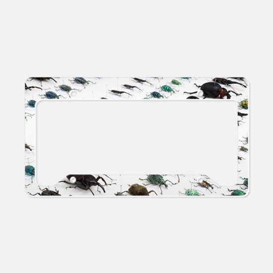 Beetle collection License Plate Holder