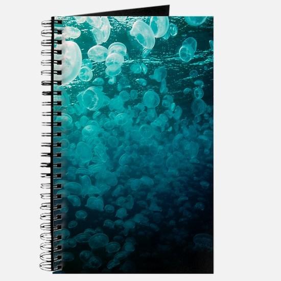Moon jellyfish Journal
