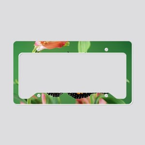Monarch butterfly License Plate Holder