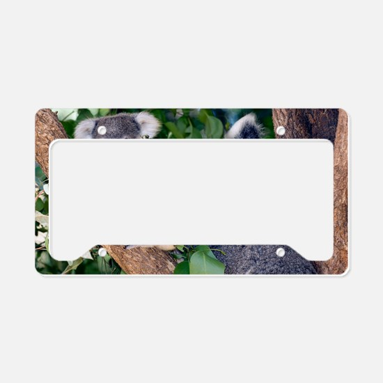 Mother koala and young License Plate Holder
