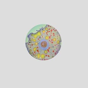 Naegleria fowleri protozoan, TEM Mini Button