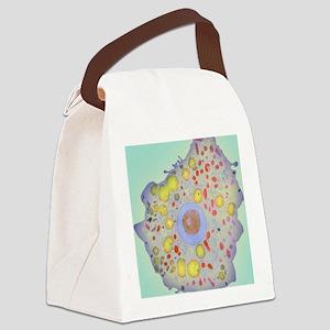 Naegleria fowleri protozoan, TEM Canvas Lunch Bag