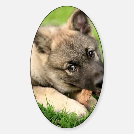 Norwegian elkhound puppy Sticker (Oval)