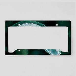 z6050224 License Plate Holder