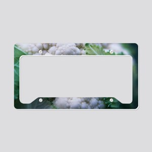 Cauliflower License Plate Holder