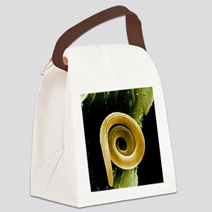 Nematode worm, SEM Canvas Lunch Bag