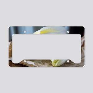Chicory License Plate Holder