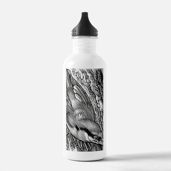 Nuthatch (Sitta sp.) Water Bottle