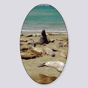 Northern elephant seals Sticker (Oval)