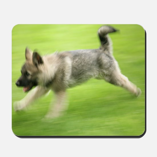 Norwegian elkhound puppy Mousepad