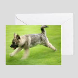 Norwegian elkhound puppy Greeting Card