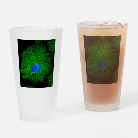 Cell microtubules, light micrograph Drinking Glass