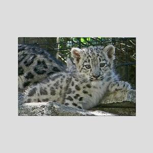 Snow Leopard Cub Rectangle Magnet