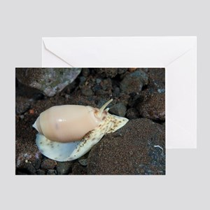 Olive shell snail Greeting Card