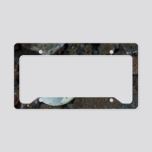 Olive shell snail License Plate Holder