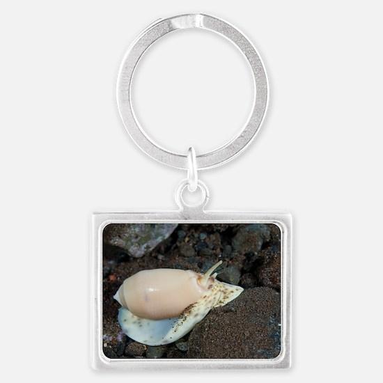 Olive shell snail Landscape Keychain