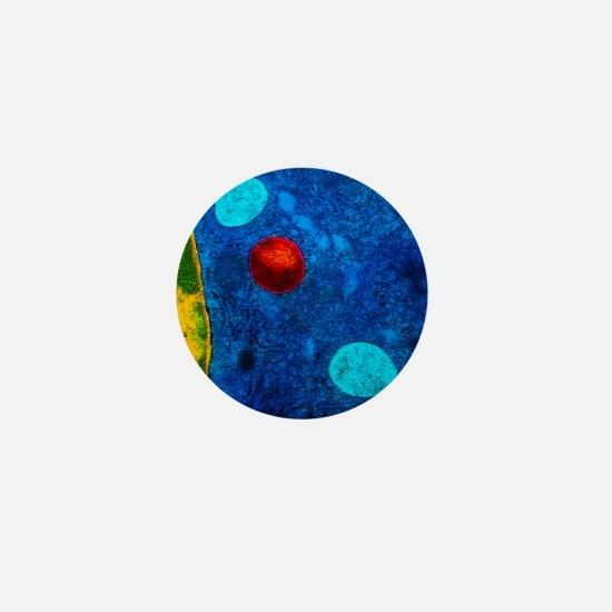 Colour TEM of primary lysosome in live Mini Button