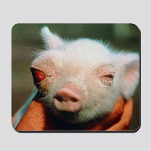 Piglet born deformed due to Chernobyl fa Mousepad