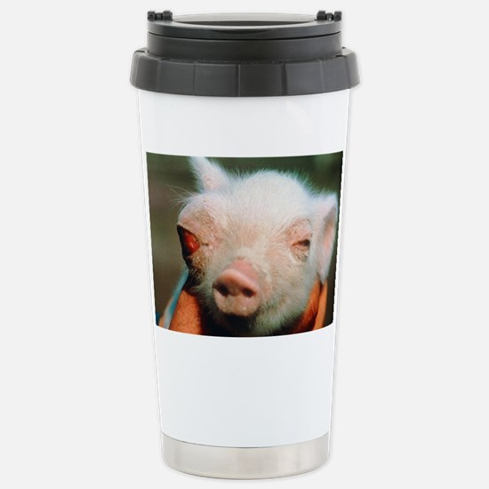 Piglet born deformed due to Che Stainless Steel Tr