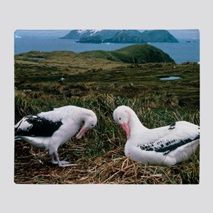 Pair of wandering albatrosses Throw Blanket