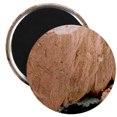 Coloured SEM of cracked eggshell Magnet