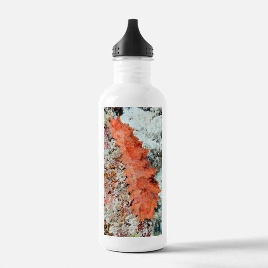 Peppermint sea cucumbe Water Bottle