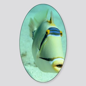 Picasso triggerfish Sticker (Oval)