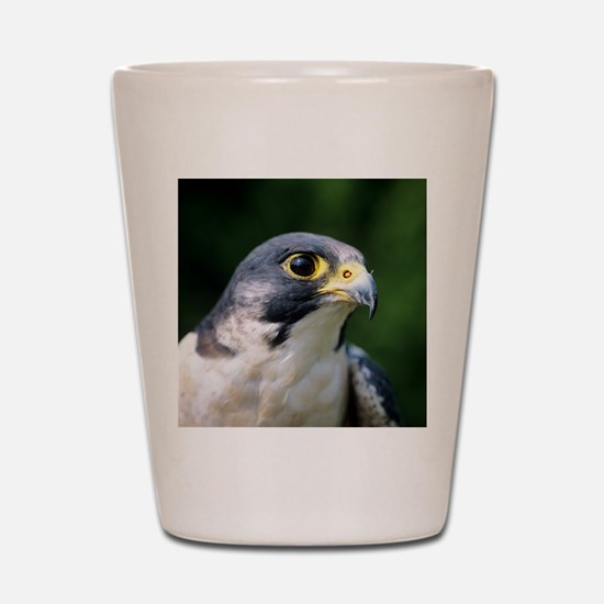 Peregrine falcon Shot Glass