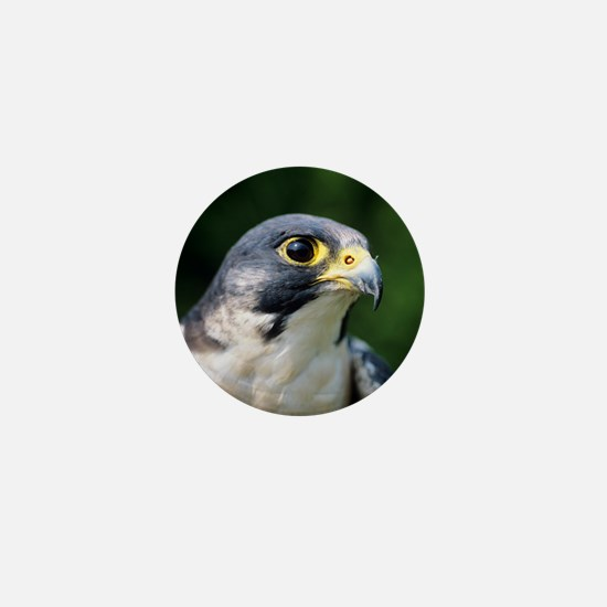 Peregrine falcon Mini Button