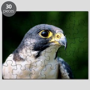 Peregrine falcon Puzzle