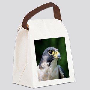 Peregrine falcon Canvas Lunch Bag