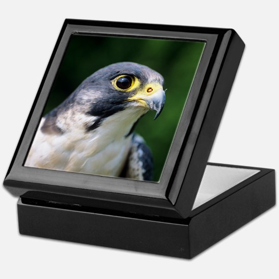 Peregrine falcon Keepsake Box
