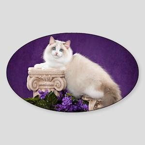 Ragdoll Cat Wall Calendar Sticker (Oval)